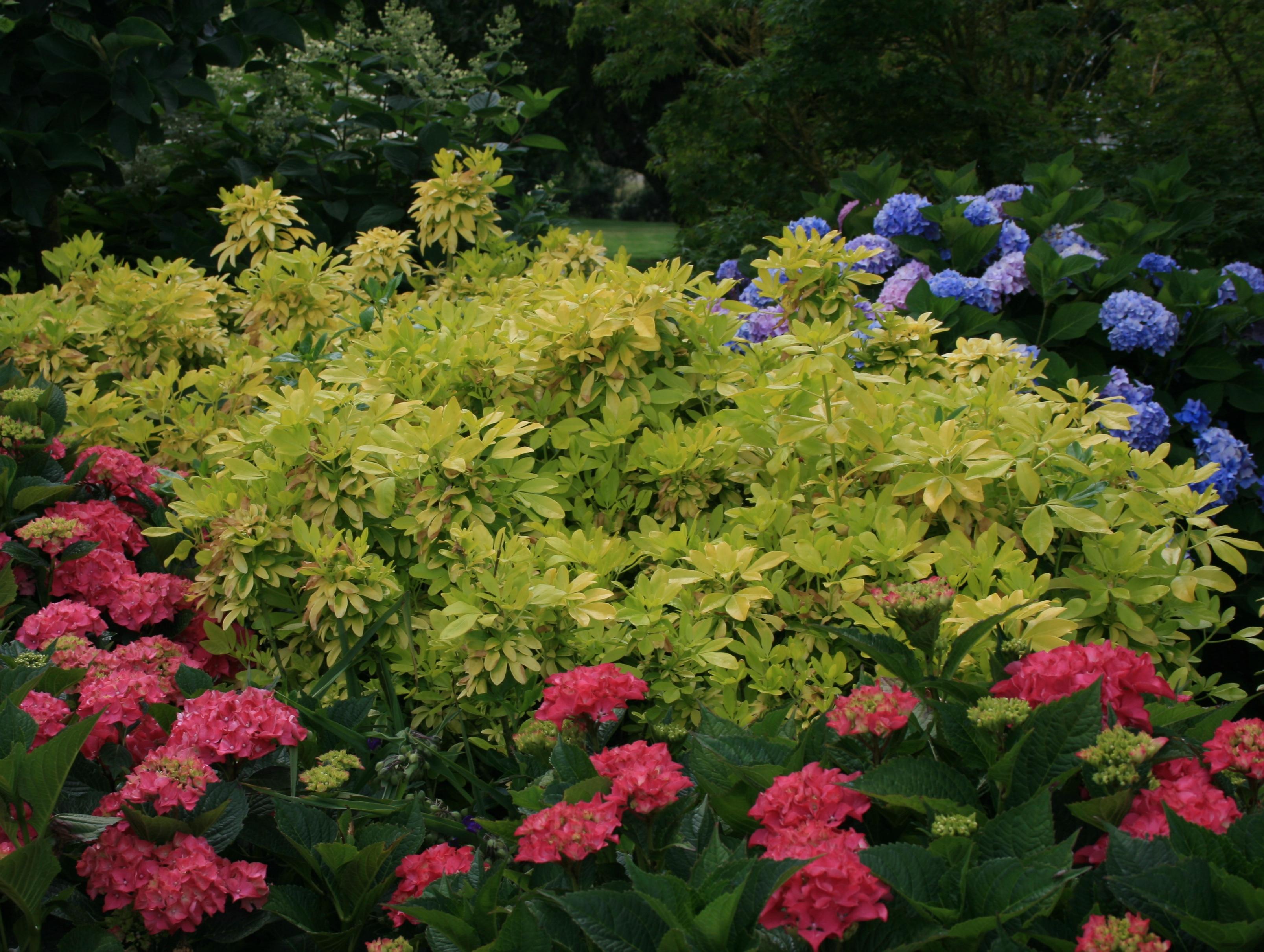 3 conseils pour r ussir son accueil au jardin jardinier for Jardinier conseil