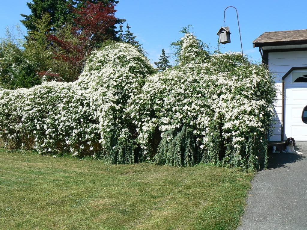 3 conseils pour r ussir son accueil au jardin jardinier. Black Bedroom Furniture Sets. Home Design Ideas