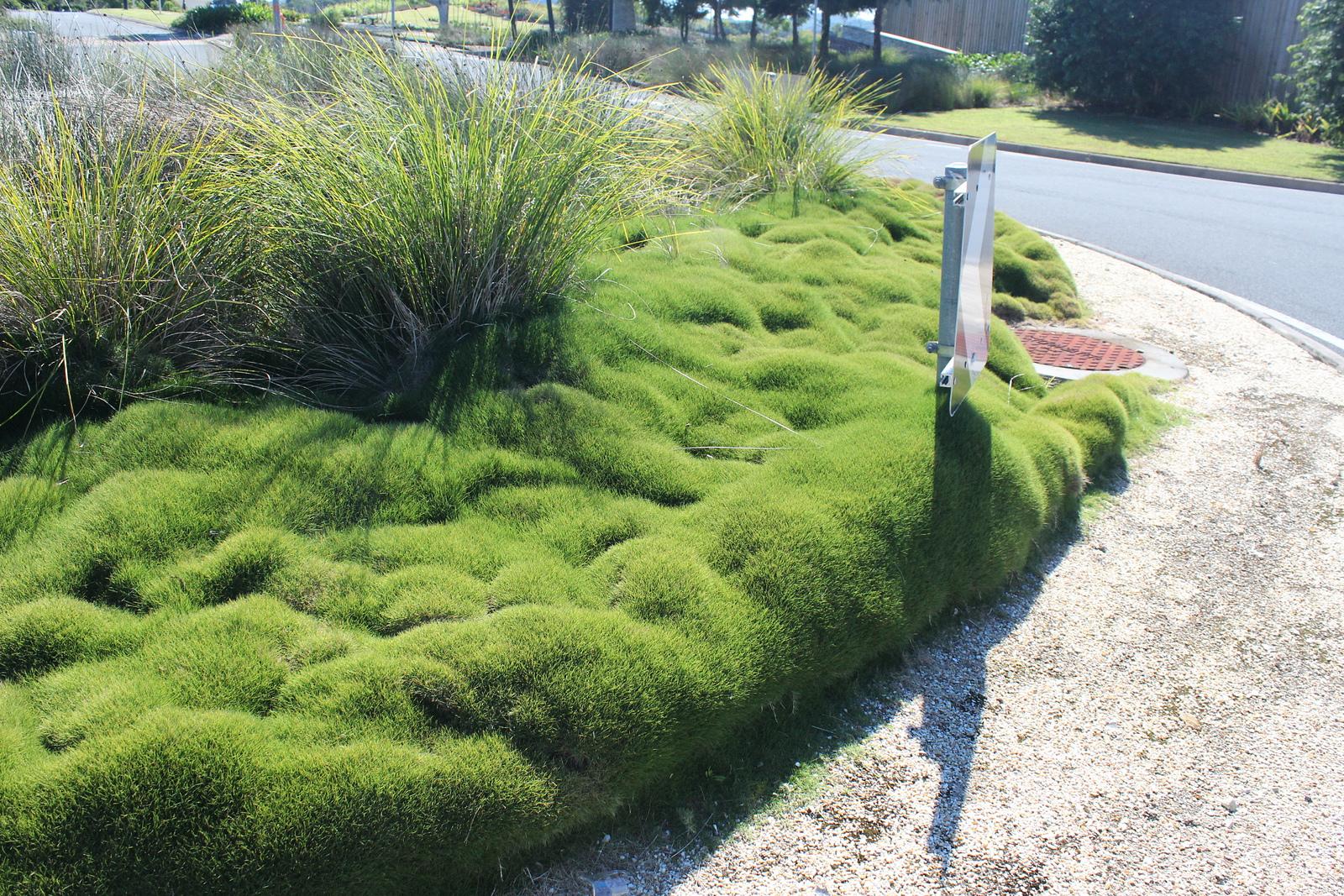 Un jardin sans entretien ou presque jardinier conseil for Plante jardin sans entretien