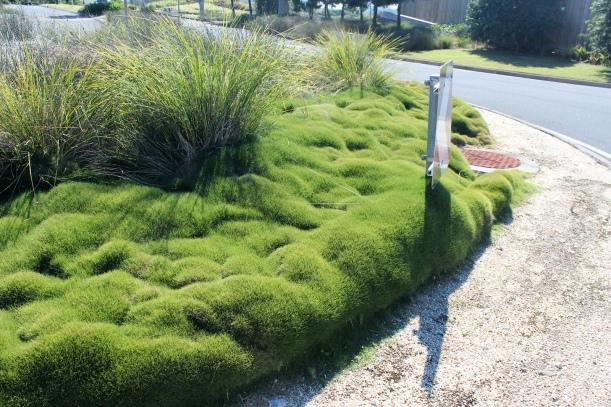 Un jardin sans entretien ou presque ! | Jardinier Conseil