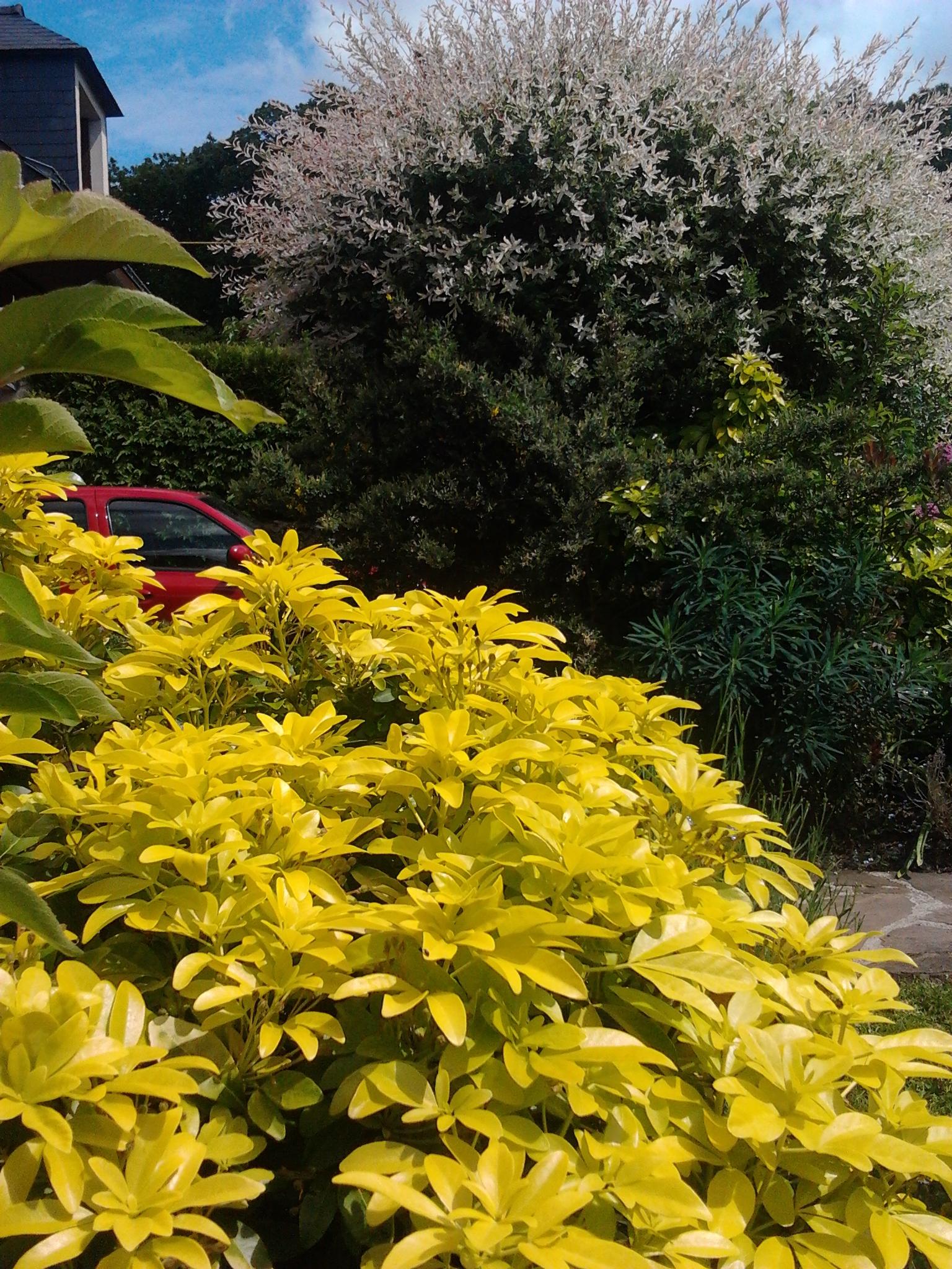 Jardin familial reposant sur nantes 44 jardinier conseil - Oranger du mexique feuilles jaunes ...