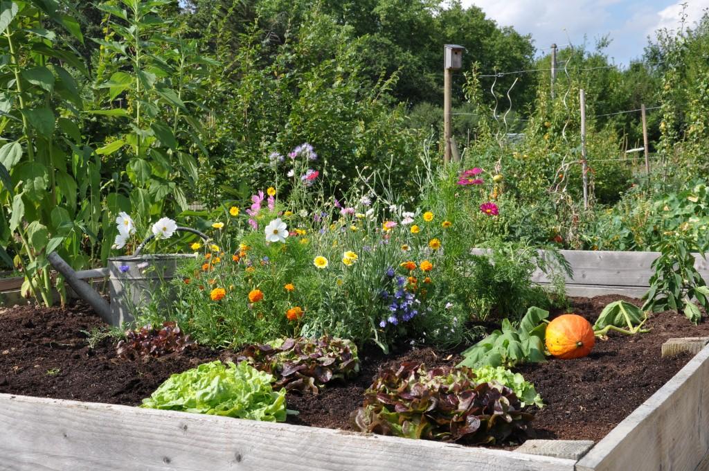Le potager se cultive toutes les sauces jardinier conseil - Association de legumes au jardin potager ...