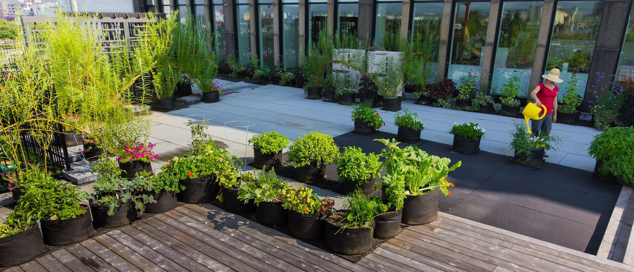 Le potager se cultive toutes les sauces jardinier conseil for Jardinier conseil