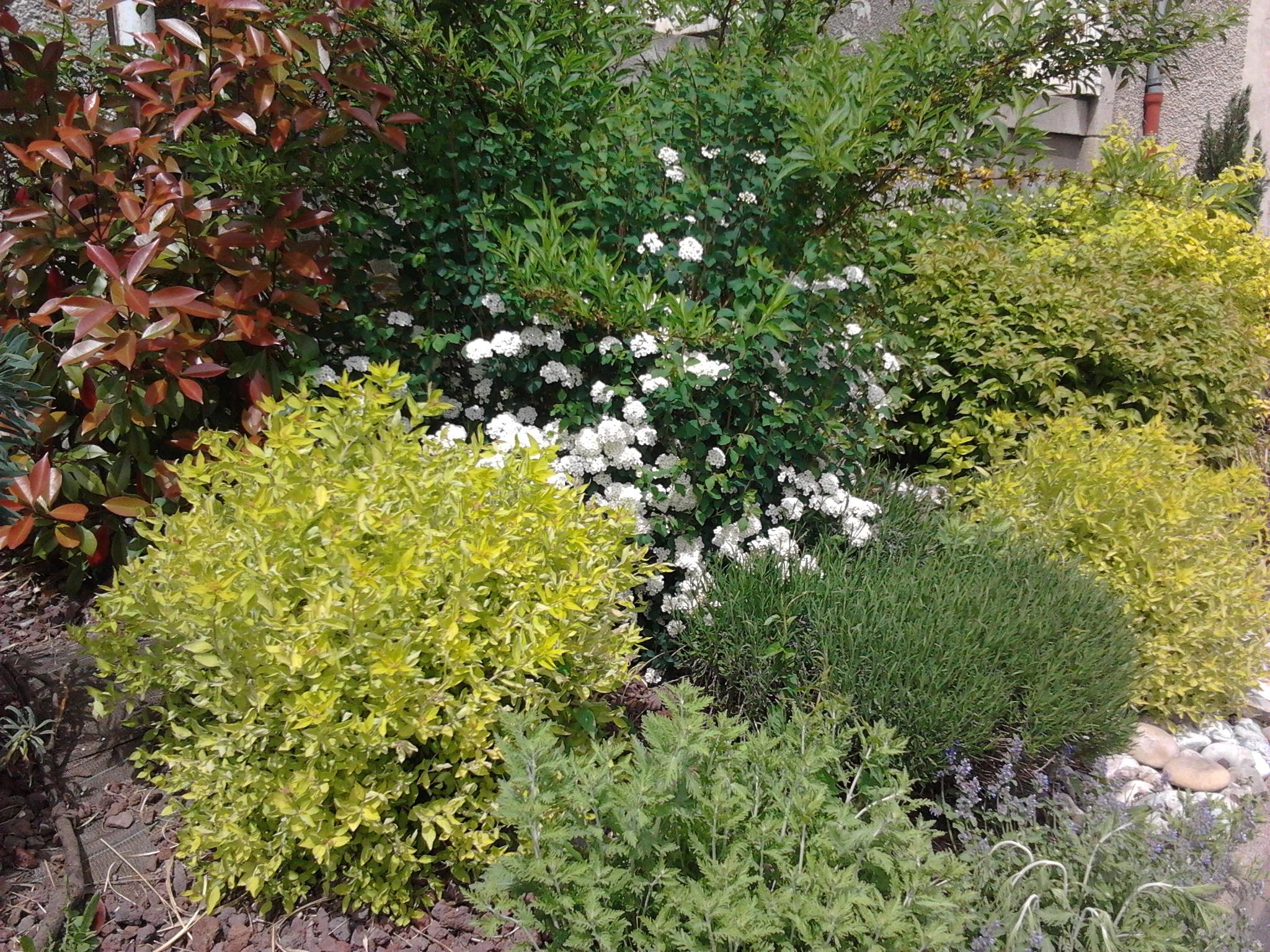 Cr er votre jardin des 5 sens jardinier conseil for Creer massif jardin