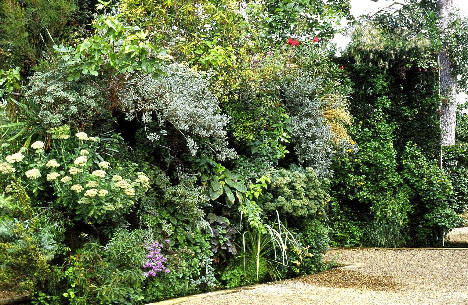 Un mur v g tal au jardin pourquoi pas jardinier conseil for Au jardin conseil