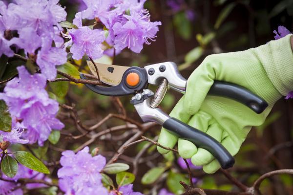 Tailler les arbustes ornementaux c est facile for Jardinier conseil