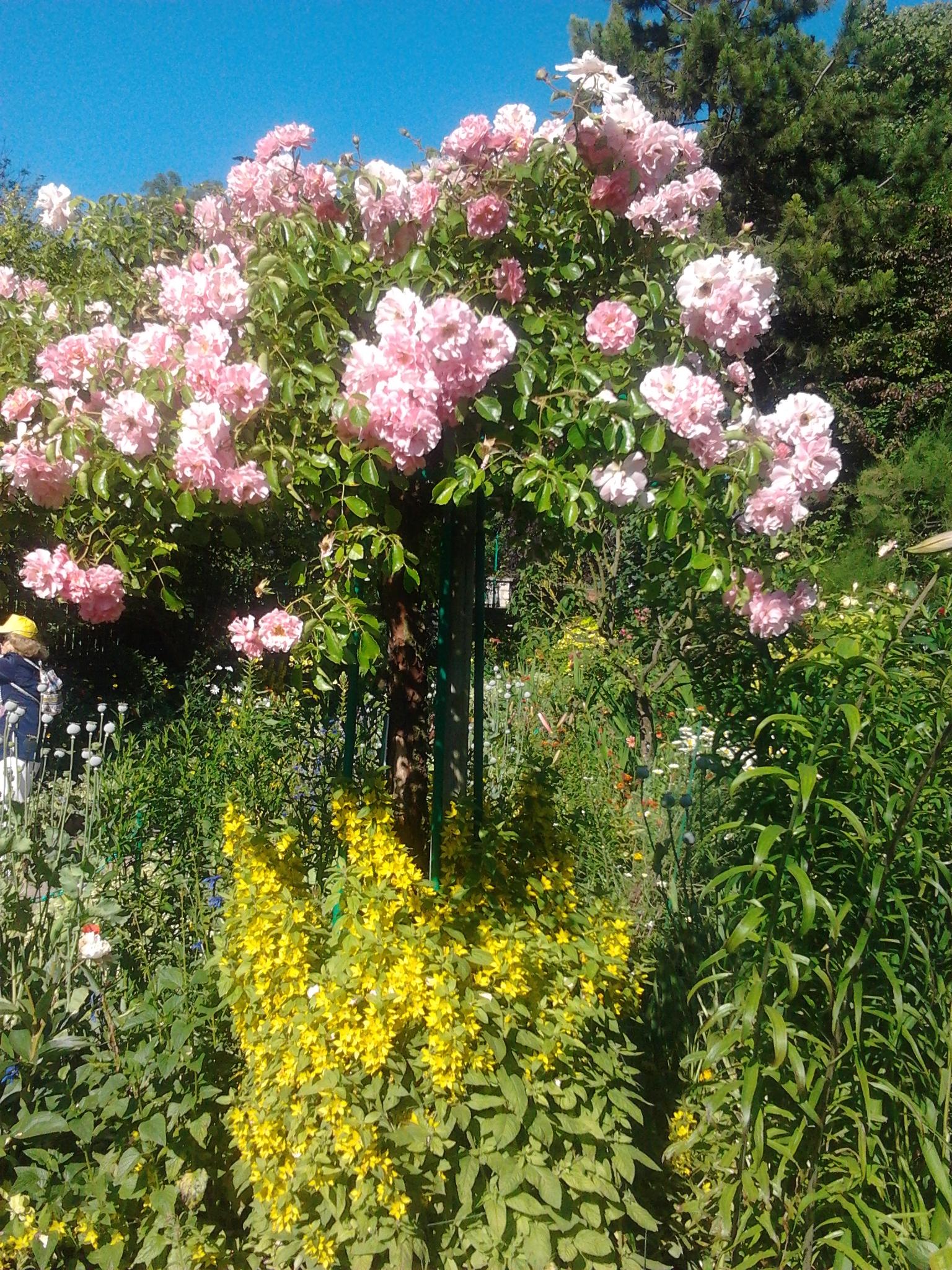 Jardins de Claude Monet  Giverny 27