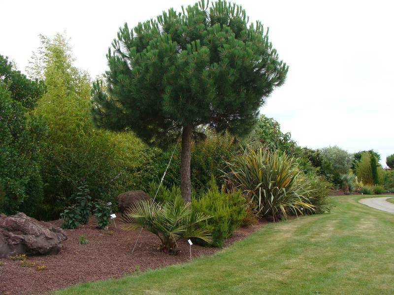 10 moyens d obtenir de l ombre au jardin jardinier conseil. Black Bedroom Furniture Sets. Home Design Ideas