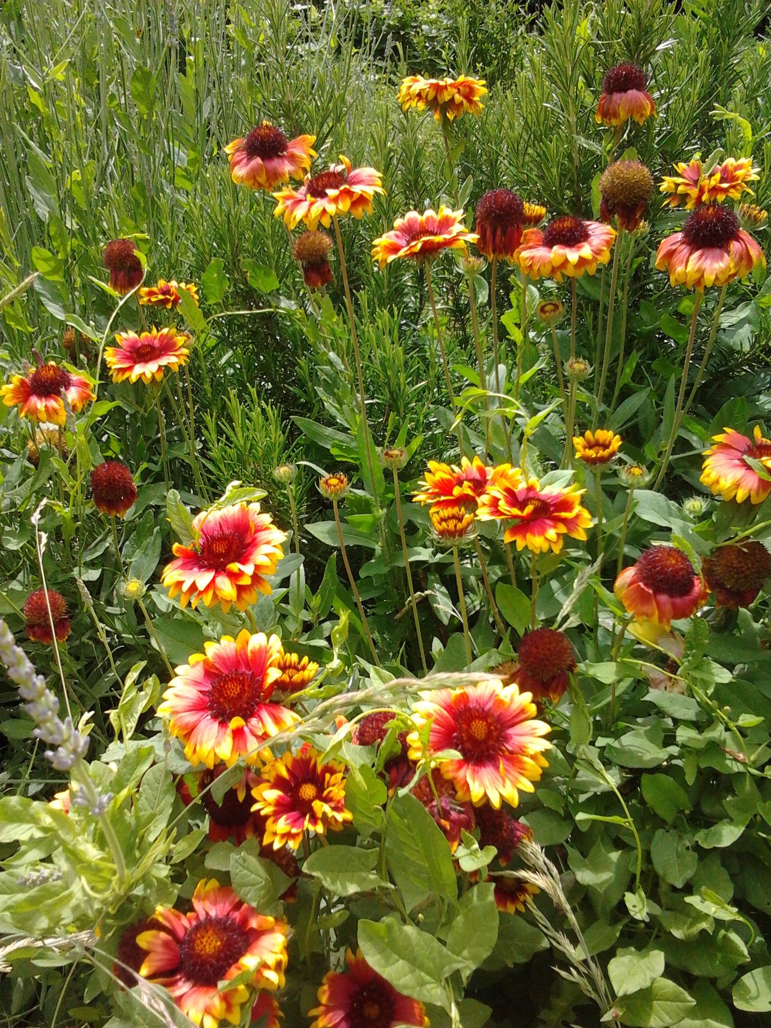 Du printemps l t dans mon petit jardin jardinier conseil for Jardinier conseil
