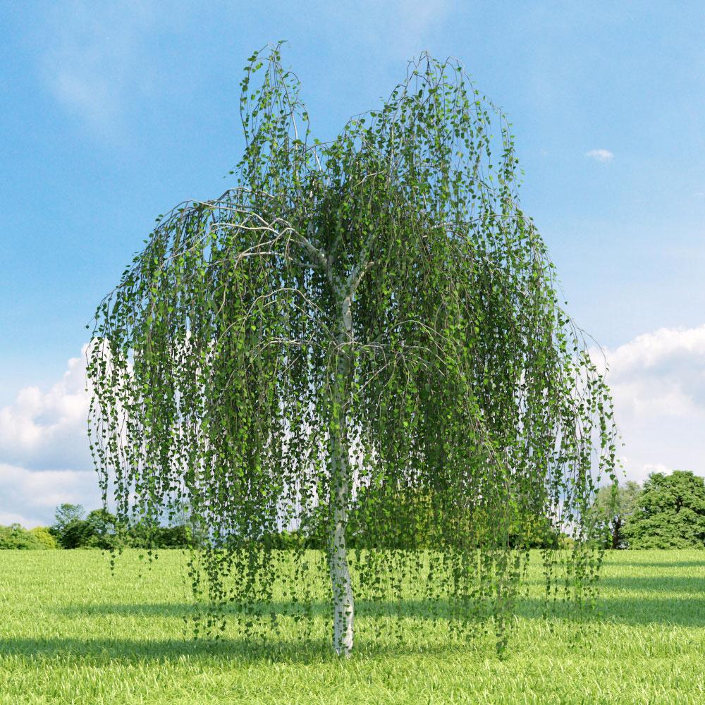 10 choix d arbres pour petits jardins jardinier conseil for Arbres pour jardin