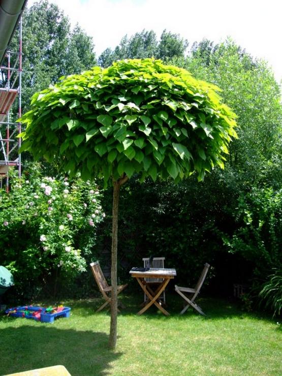 10 Choix D Arbres Pour Petits Jardins Jardinier Conseil