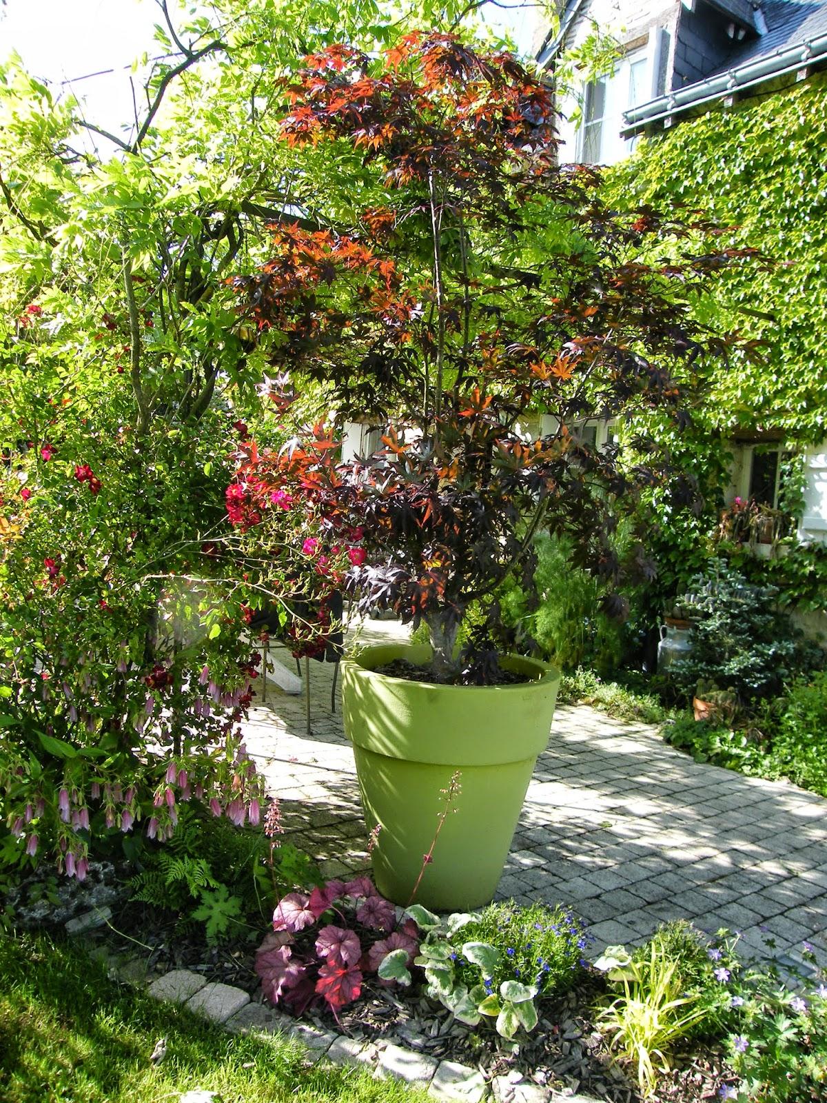 le garden staging acc l rateur de vente jardinier conseil. Black Bedroom Furniture Sets. Home Design Ideas