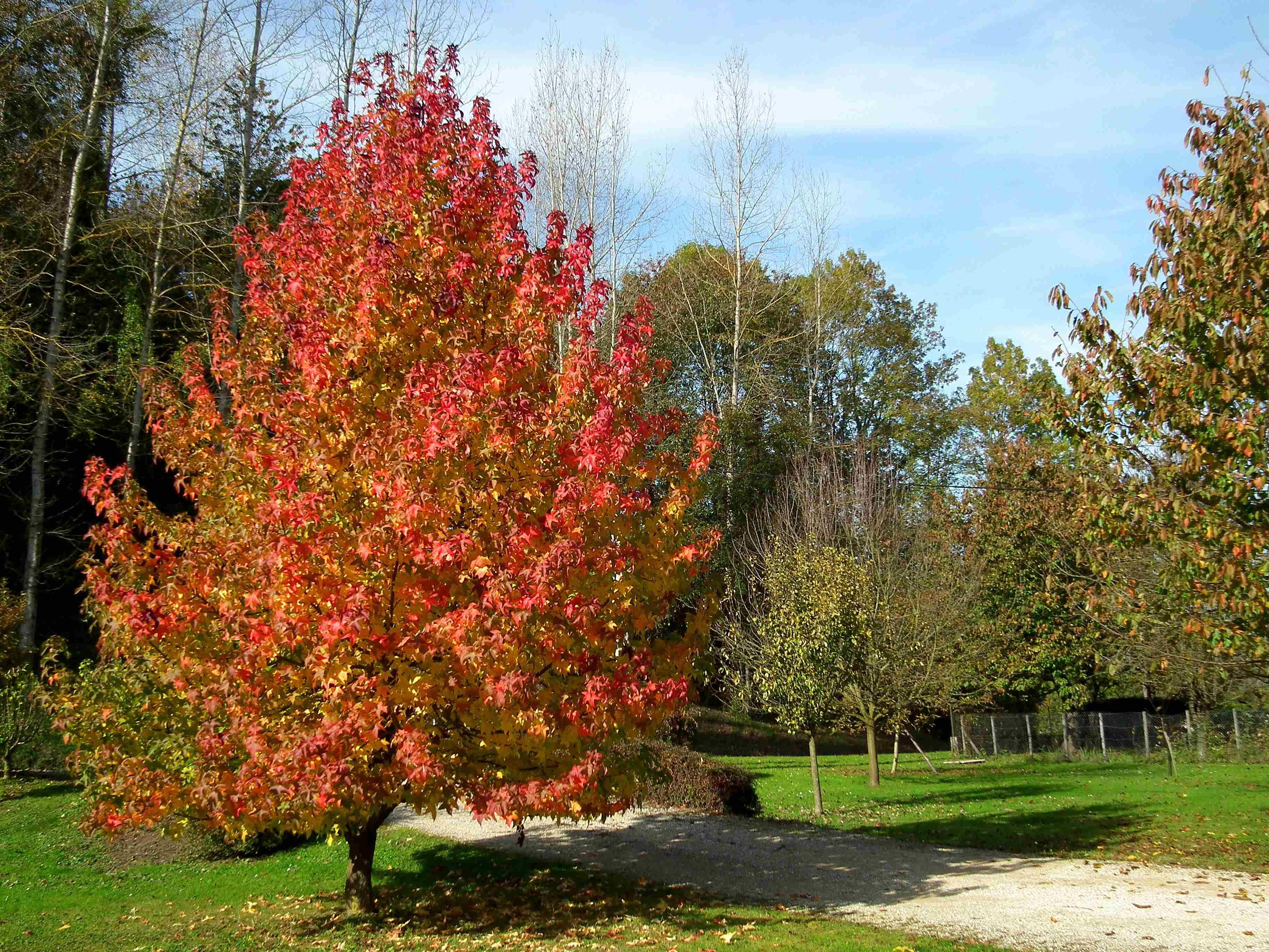 L automne charme par son feuillage jardinier conseil for Jardinier conseil