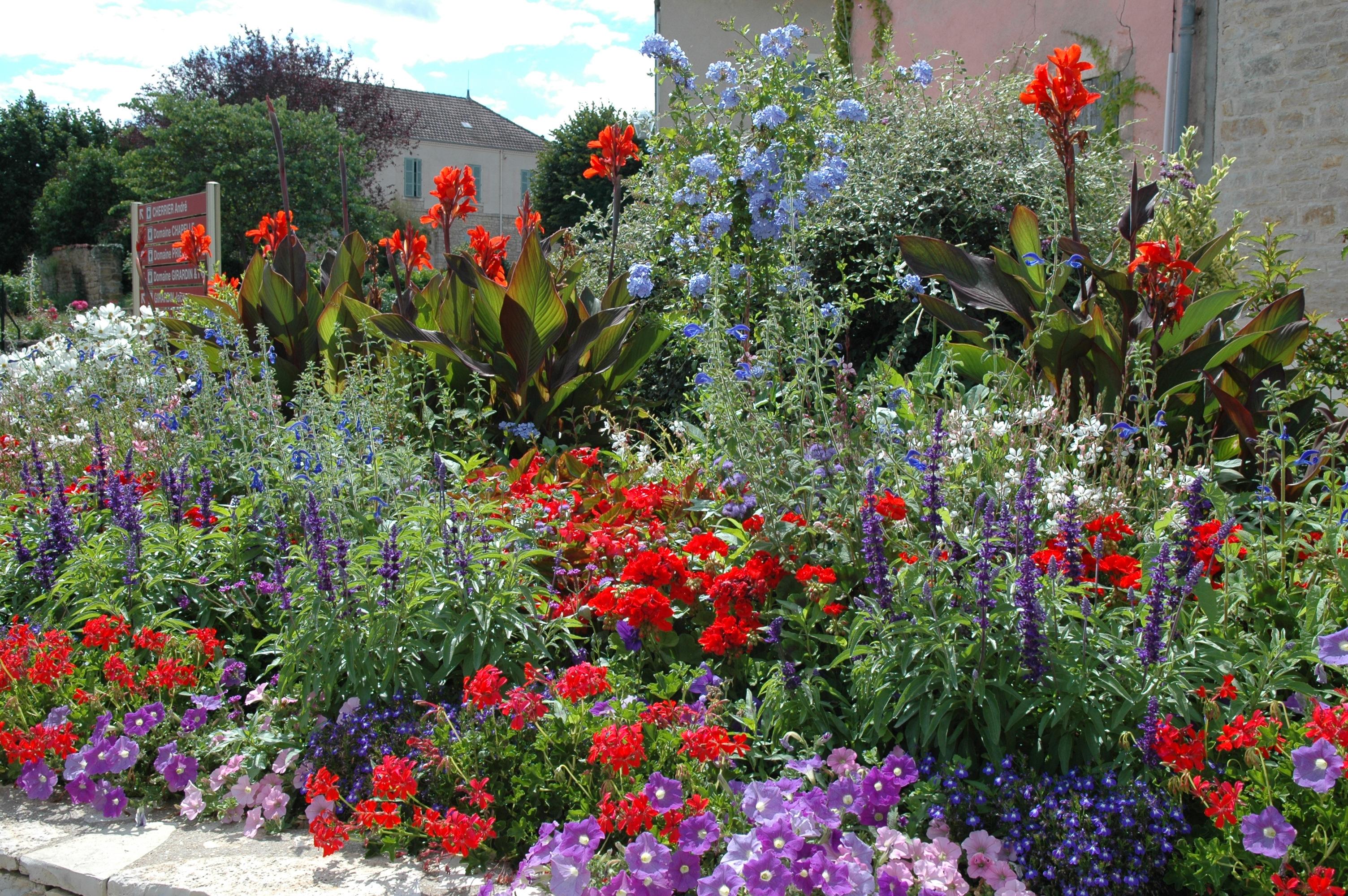 Harmonies de couleurs au jardin jardinier conseil for Jardinier conseil
