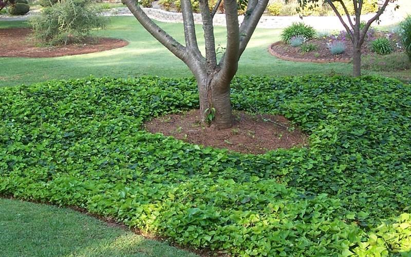 Imp riales couvre sol rustiques jardinier conseil for Jardinier conseil