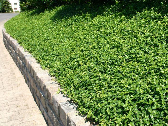 Imp riales couvre sol rustiques jardinier conseil - Bache pour talus ...